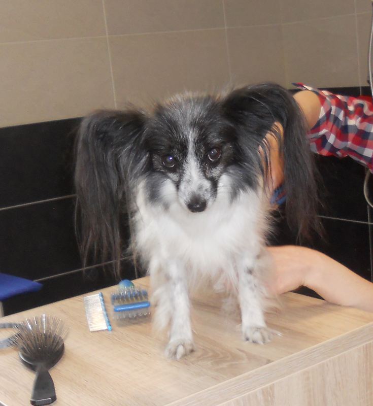 chien au bain à la lpa