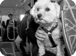 présentation astuce toilettage pour chien