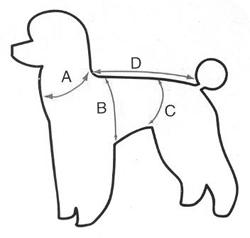 mesures de chien